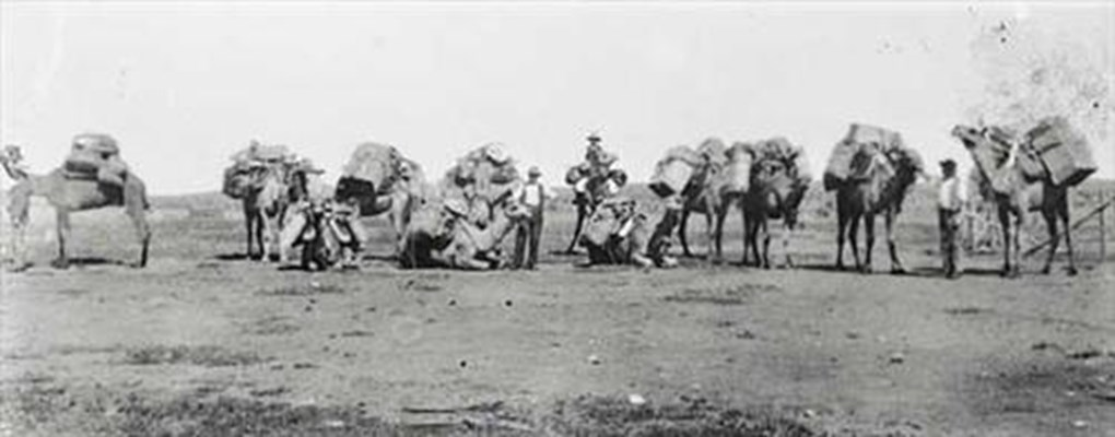 Historical - Camel Train